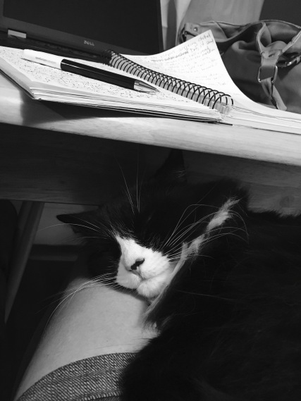 You work, I'll nap.